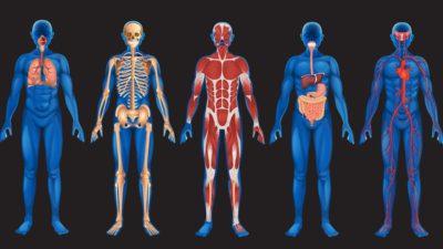 Curiozități neobișnuite despre corpul uman pe care trebuie să le afli