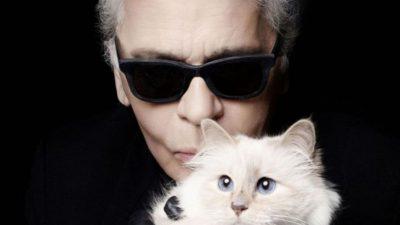 Pe câte milioane a pus ghearele pisica Choupette, moștenitoarea celebrului Karl Lagerfeld