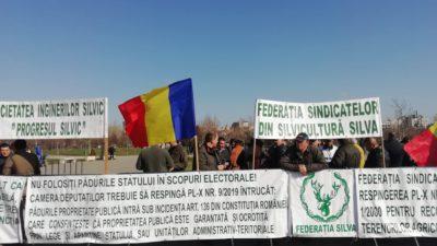 """Un deputat cere oprirea """"pomenilor electorale cu pădurile țării"""""""
