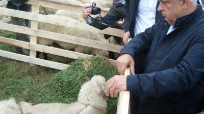 Petre Daea și-a ales mielul în funcție de cioban. Cât a plătit pentru animalul crescut la Teleorman
