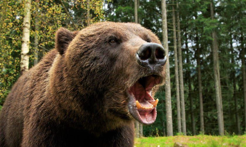 Povestea omului care a supraviețuit o lună în bârlogul unui urs. Adevărul a ieșit la iveală
