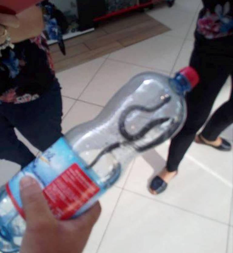 Șarpe descoperit într-un mall din Târgu-Jiu. Cum a fost posibil așa ceva. FOTO