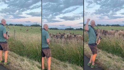 A cântat la saxofon pentru vaci: reacția neobișnuită a cirezii a devenit virală