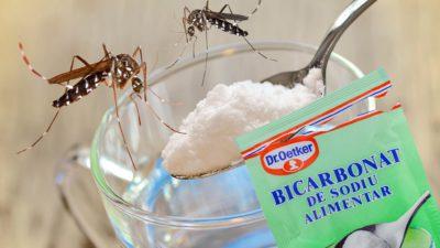 Cum scapi de țânțari cu bicarbonat de sodiu, soluție naturală și ieftină, preparată în casă