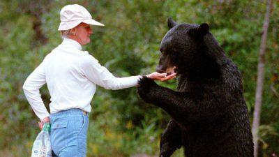Ce să nu faci pe Transfăgărășan: hrănirea urșilor, de fapt, îi condamnă la moarte