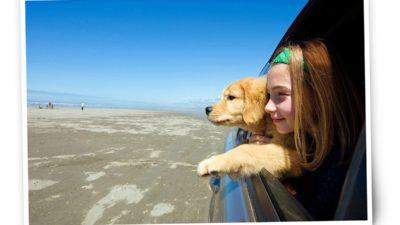 Îți oferă mii de euro să te duci în vacanță cu câinele sau pisica: care este explicația