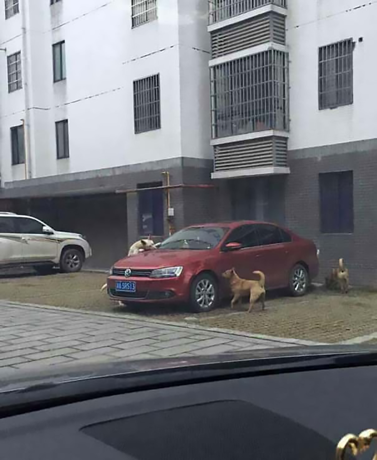 driver-who-kicked-stray-dog-watches-car-get-destroyed-after-same-dog-returns-with-a-few-of-his-friends5
