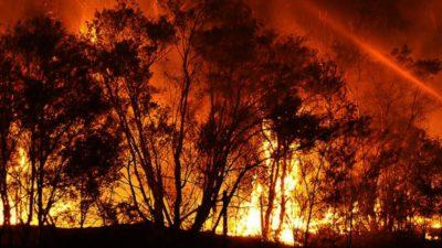 Stare de urgență în Australia! Statul New South Wales, cuprins de flăcări. Incendiile de vegetație fac ravagii