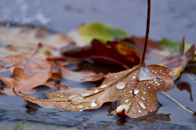 Prognoza meteo pentru duminică, 17 noiembrie, indicată de către Administrația Națională de Meteorologie