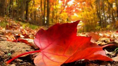 Prognoza meteo pentru jumătatea lunii noiembrie. Anunț important de la ANM