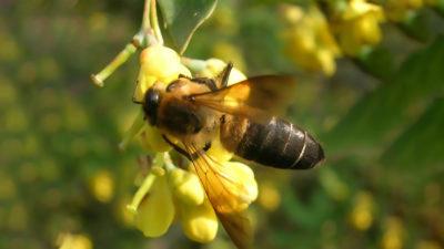 Mierea pe care ar interzice-o USR-ul: de ce are efect psihedelic și unde o găsești