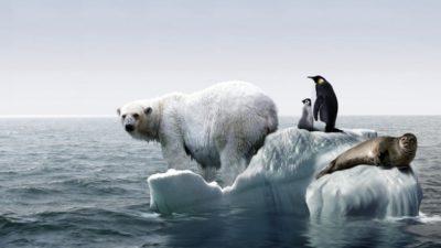 Avertismentul ONU despre încălzirea globală: cât de gravă a fost situația în 2019 și ce ne așteaptă în 2020