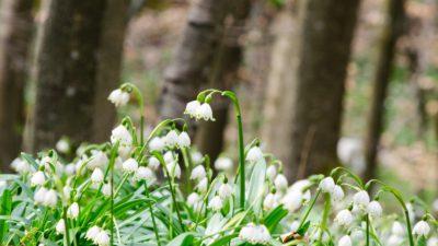 Vremea se schimbă în weekend, de parcă vine primăvara