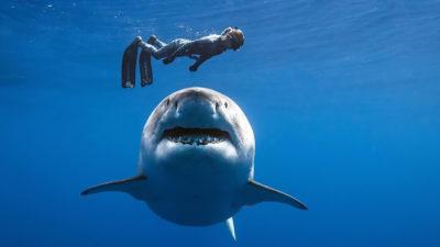 """A întâlnit cel mai mare rechin, din greșeală: cum a reacționat """"marele alb"""""""