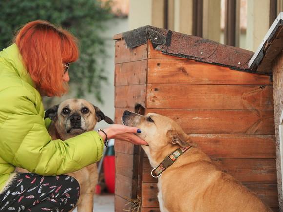 Moartea Cristinei Țopescu, suportată cu greu de către câinii cu care locuia. Ce se întâmplă acum cu animalele de companie