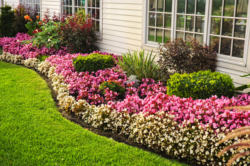 Utilizarea nebănuită a bicarbonatului de sodiu în grădina casei tale. Cum poate fi utilizat?