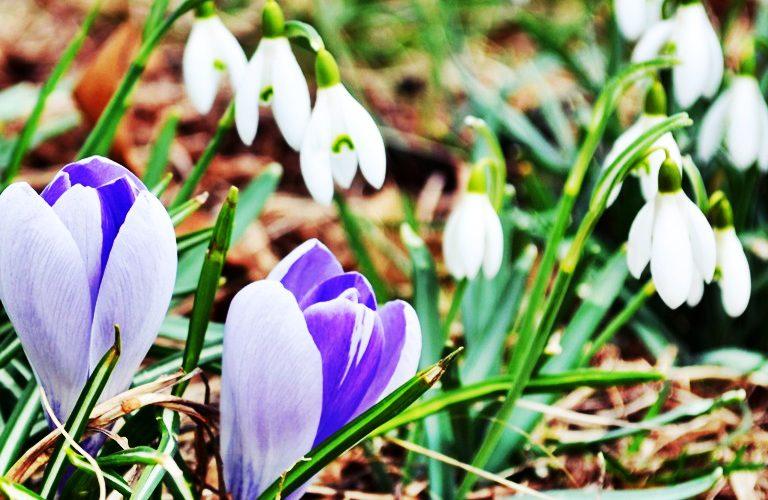 Se schimbă vremea în România. Fenomen neobișnuit în luna aprilie. Ce se întâmplă cu temperaturile
