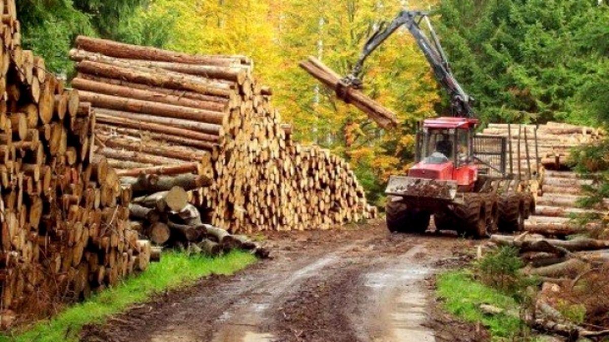 Președintele Iohannis a semnat decretul care interzice exportul extracomunitar al buștenilor