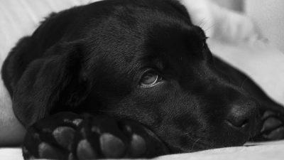 Specialiștii au cercetat de ce sunt câinii cei mai buni prieteni ai omului. Ce au descoperit