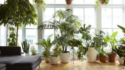 Plantele care îți dau energii pozitive. Cu ce flori trebuie să îți umpli casa și biroul
