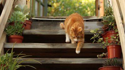 Plante toxice pentru câini și pisici. Nu trebuie să le ții în casă, sub nicio formă!