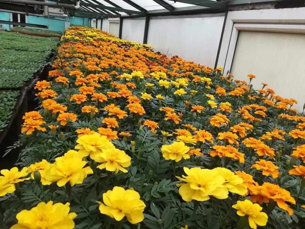 Flori în solarii: afaceri