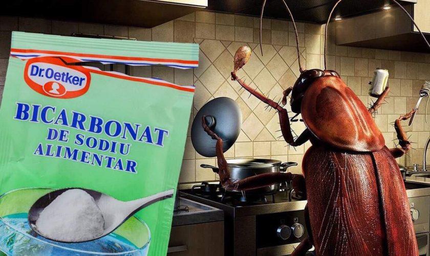 Cum scapi de gândacii de bucătărie cu bicarbonat de sodiu. Ce trebuie să faci în casă