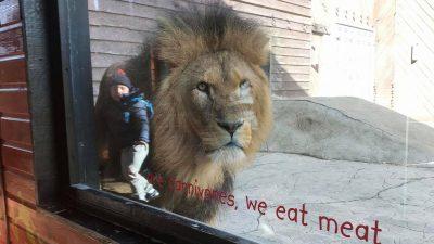 Cum a ajuns un copil de 4 ani în cușca unui leu. Imaginea ireală a îngrozit tot internetul!
