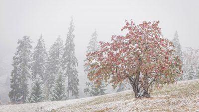 Alertă meteo ANM. România, cuprinsă de un val polar. Temperaturile încep să treacă pe minus