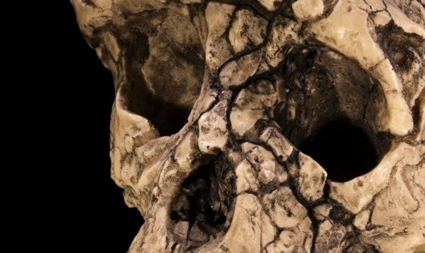 Descoperirea care a uimit lumea. Secretul ascuns de acest craniu vechi de 7 milioane de ani