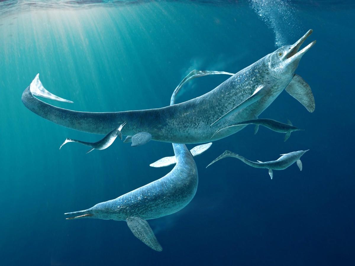 Fosila descoperită avea 5 metri lungime