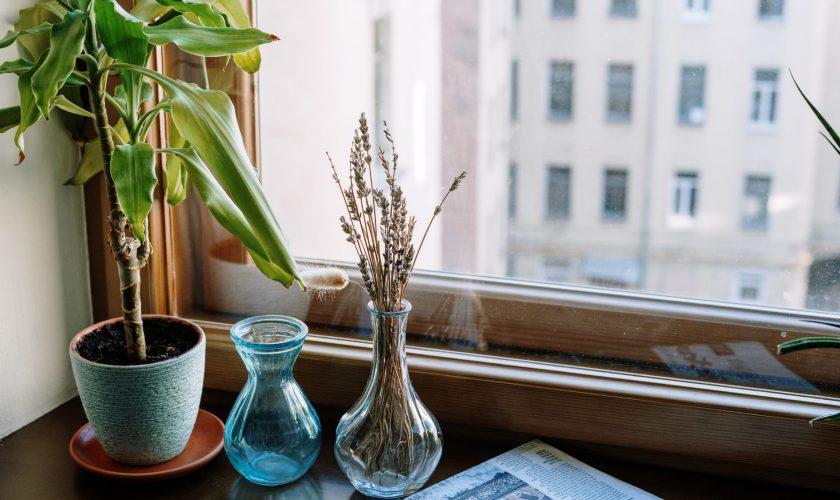 Plantele periculoase care te îmbolnăvesc. Mulți români le au în casă, fără să le știe secretul fatal