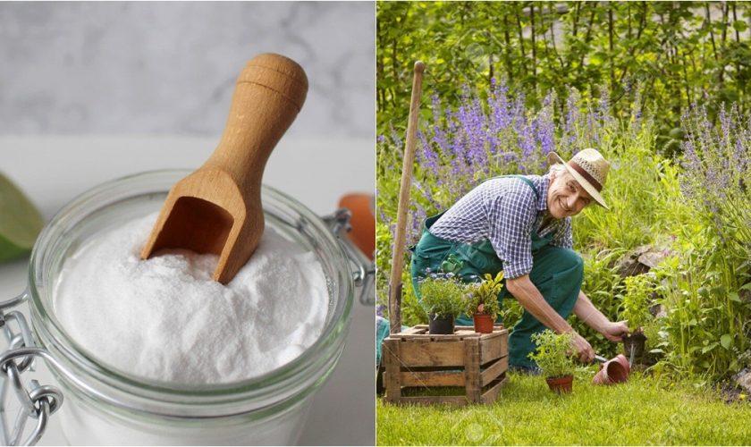 Un bărbat a pus bicarbonat de sodiu în grădină. Ce s-a întâmplat după doar câteva ore