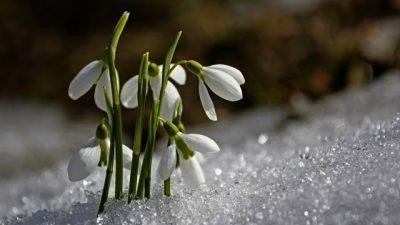Prognoza meteo februarie – martie. Meteorologii au făcut anunțul despre luna lui Mărțișor