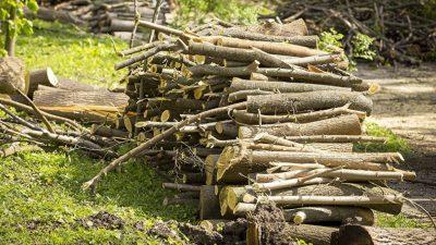 Activiști de mediu, bătuți de șoferul unui transport ilegal de lemne. Ce s-a întâmplat când au sunat la 112