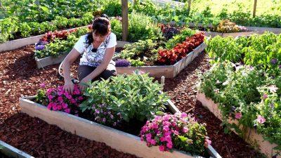 Cum îți faci o gradină de legume acasă. 7 sfaturi de la fermierii României