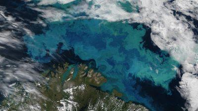Descoperire șocantă la Marea Neagră. Specialiștii trag un semnal de alarmă uriaș
