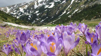 Vremea pe 1 martie. Anunțul meteorologilor, ce temperaturi avem în prima zi a primăverii