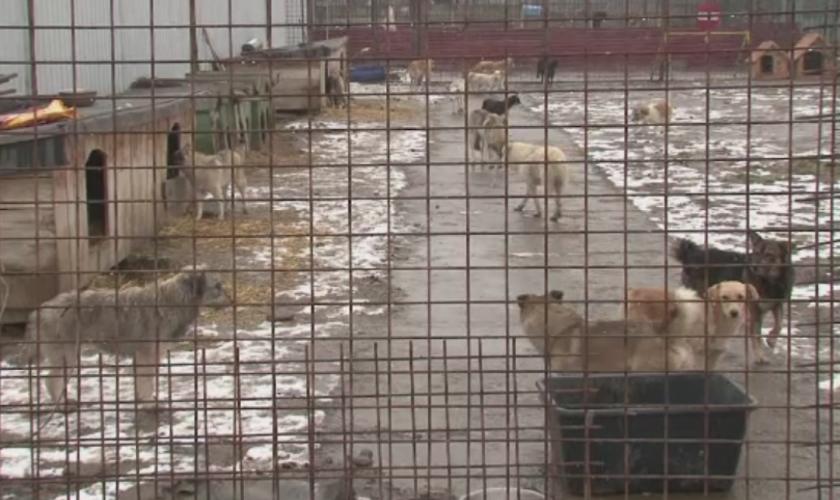 Imaginea durerii într-un oraș din România. Cum arată locul în care sunt ținuți captivi 20 de câini