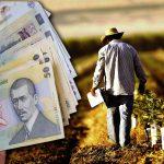 Se dau bani de la stat pentru agricultori. Cine poate câștiga până la 3.000 de euro pentru un hectar