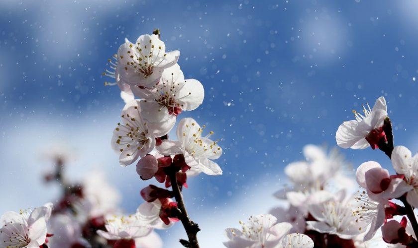 Meteo de Florii. Vremea se răcește în weekend. În ce zone vor fi maxime de 20 de grade