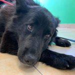 Un căţel din Suceava, străpuns de o săgeată şi lăsat în suferință. Cine a comis fapta îngrozitoare