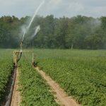 Ce se va întâmpla cu terenul arabil din România până în 2030. Vești proaste pentru toți românii
