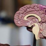 La ce vârstă nu îți mai produce creierul neuroni. Ce trebuie să faci atunci ca să îți fie bine