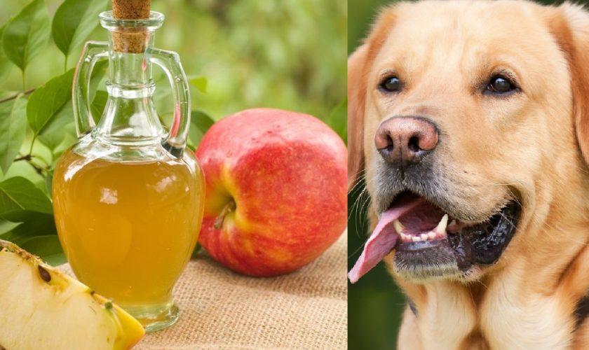 A pus oțet de mere pe frunzele legumelor, le-a lăsat în frigider și apoi le-a dat câinilor. Ce s-a întâmplat după este uimitor