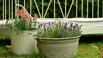 Ce se întâmplă dacă îți plantezi lavandă în curte, de fapt. Puțini români știu asta