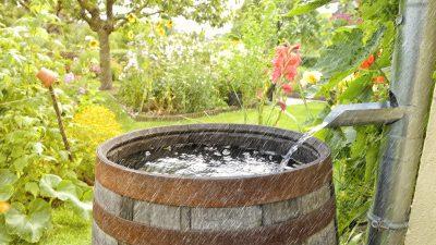 Cum neutralizezi ploaia acidă pentru a uda grădina cu ea. Trucul secret și ieftin al gospodarilor de la țară VIDEO