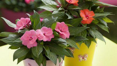 Florile și plantele pe care trebuie să le ții în casă. Aduc mult noroc și fericire în viața ta