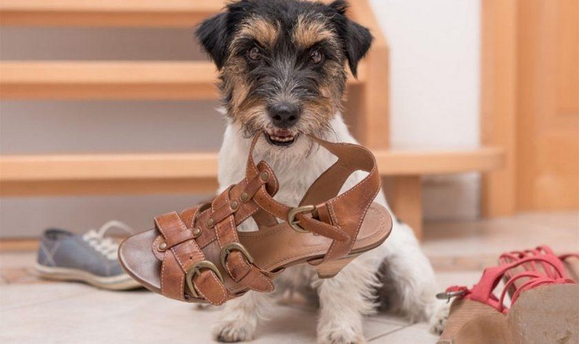 Obiectele periculoase pentru câinii tăi. Ce să nu îi lași să roadă, sub nicio formă