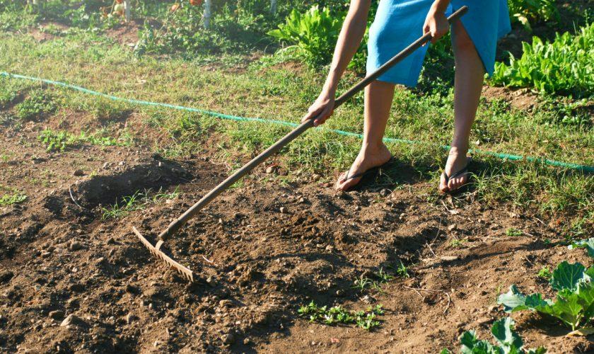 Cum testezi pământul din grădina ta. Așa afli dacă e bun pentru plante sau nu